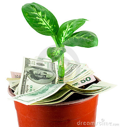 Young plant over dollars