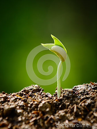 Young plant, seedling, sprout, growing Stock Photo