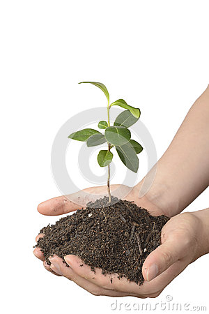 Young plant with soil on hands stock photo image 42358641 for Soil young s modulus