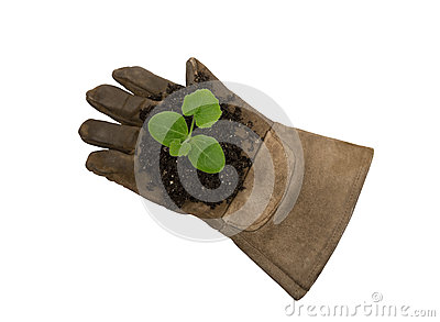 Young Plant On Work Glove XXXL Isolated On White