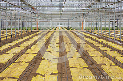 Young plants in plant nursery
