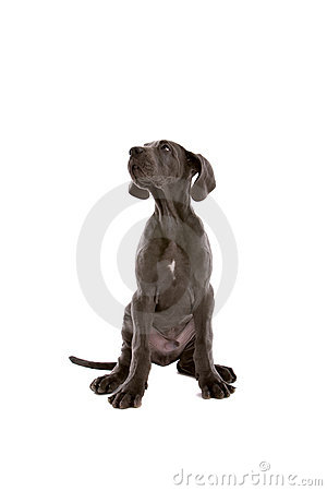 Free Young Puppy Dog Stock Photography - 7281712
