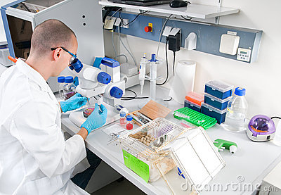 Young scientist works in the laboratory