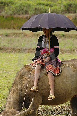 Free Young Shepherdess Hmong Flower Sitting On His Buff Royalty Free Stock Photography - 18051857