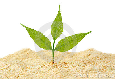 Young sprout grows from sand