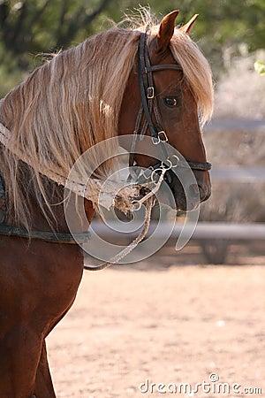 Free Young Stallion Royalty Free Stock Photos - 6351808