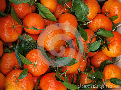 Young tangerines