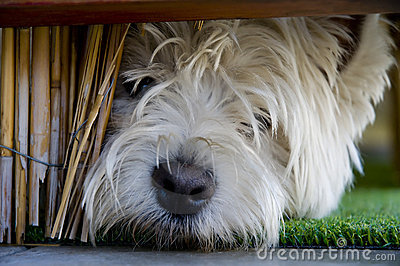 Young terrier under bannister