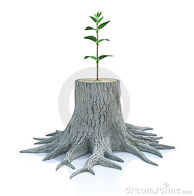 Free Young Tree Seedling Grow From Old Stump Stock Photo - 17282270