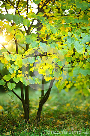 Free Young Tree With Green And Yellow Leaves In The Sunlight Stock Images - 46052194