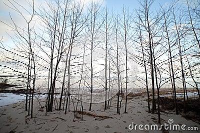 Young trees at sea.