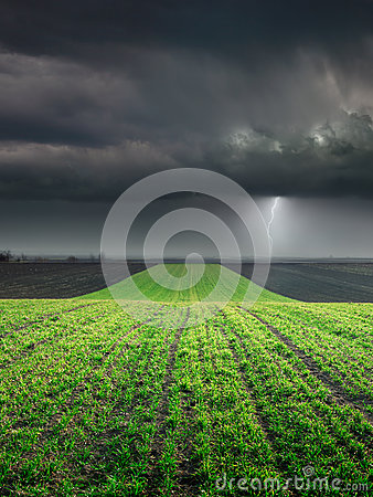 Free Young Wheat Crop In Field Against Large Storm Stock Photo - 39362180