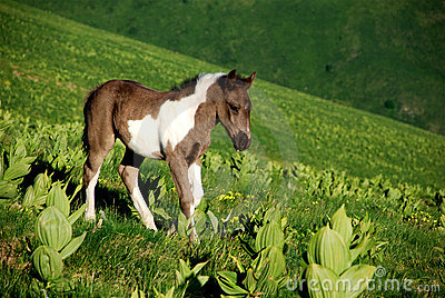 Young Wild horse in nature
