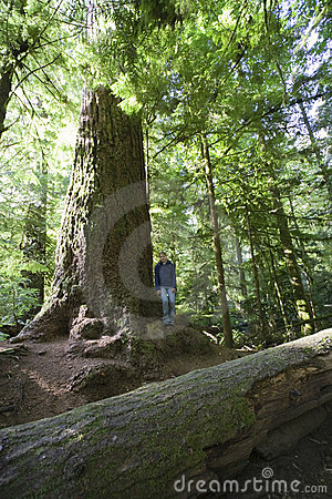 Young Woman next to giant Douglas Fir