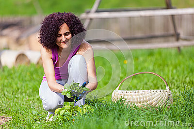 Young woman picking nettles in a basket