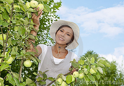 Young woman standing at apple tree