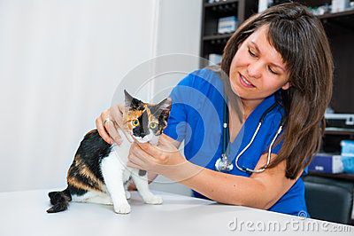 Young woman vet inspects cat