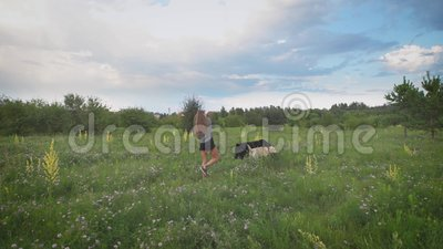 Young woman is walking two dogs in green blooming field in summer evening, dogs are playing, beautiful cloudy sky is in. Background. Summer time stock video