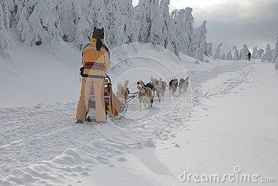 Young women-musher on trail of Sedivacek s long Editorial Image