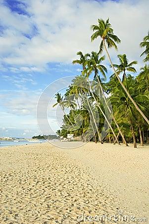 Your Own Tropical Beach
