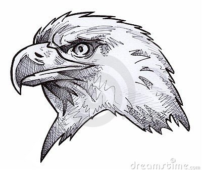 łysego orła nakreślenie