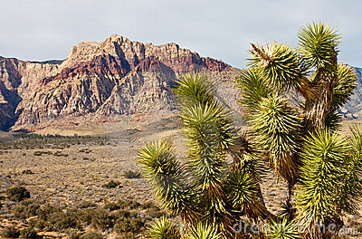 Yucca Plant in Desert with Mountains in Background