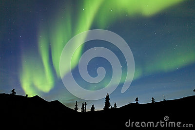 Night sky over boreal forest spruce trees of yukon territory canada