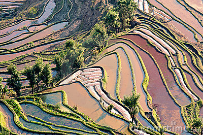 Yunnan, China, Yuanyangtitian, clouds around, the