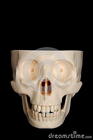 Zabawna czaszki