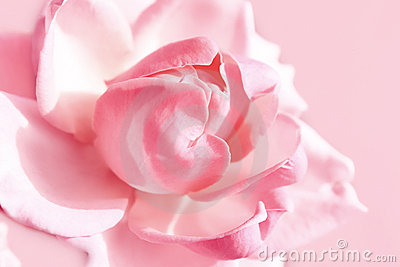 Zachte roze nam toe