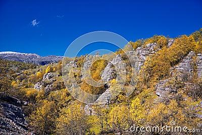 石森林在秋天,希腊的zagoria地区.图片