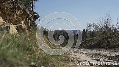 zandige weg in het midden van het bos stock video