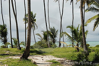 Zanzibar beach vegetation