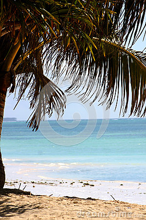 Zanzibar White Sandy Beach And Palm Tree