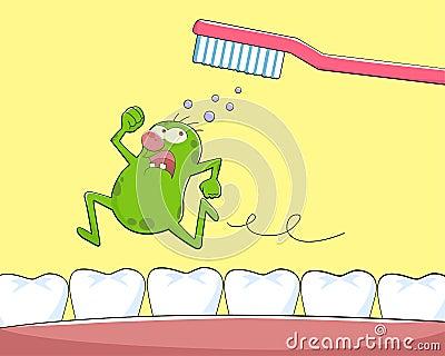 Zarazka ząb