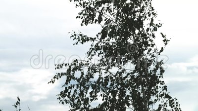 Zasięrzutny żuraw - zwitki tong niesie stalową zwitkę wyznaczający miejsce w automatyzującej magazynowej składowej łatwości zdjęcie wideo