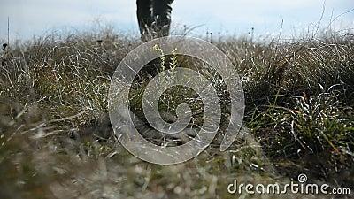 Zbliżenie mans stopa czyj sylwetka iść poza horyzont w defocus Spacery przez pole dzika trawa zbiory