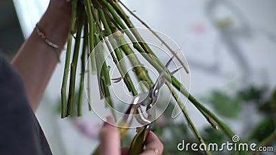 Zbliżenie rąk nierozpoznawalnej kobiety kwiaciarni cięcie łodygi kwiatów zdjęcie wideo
