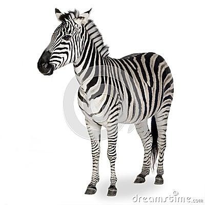 Free Zebra Royalty Free Stock Photo - 3752925