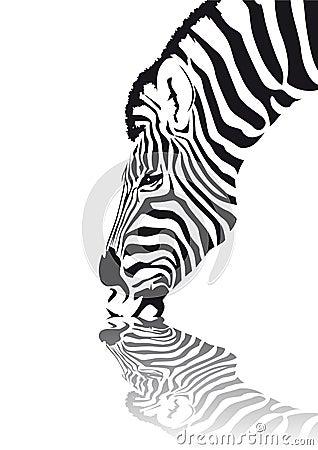 Free Zebra Stock Photo - 4042670