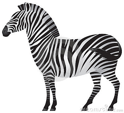 Zebra, African animal in
