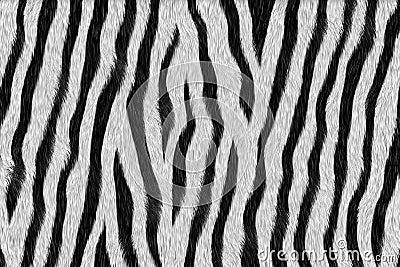 Zebra - animal fur