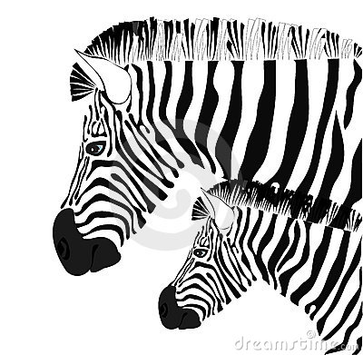 Zebra and baby illustration