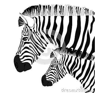 Zebra and baby illustration