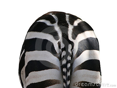 Zebra, back view