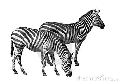 Zebra couple cutout