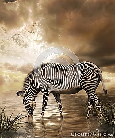 Free Zebra Dream Stock Photos - 5757333