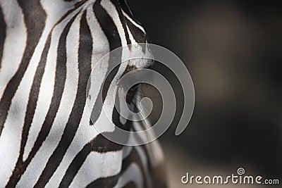 Zebra feature