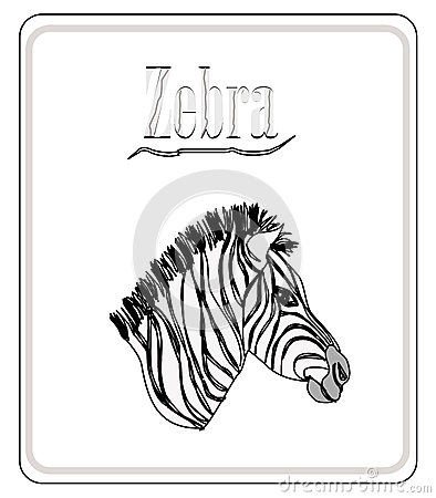 Zebra. Hand drawn sketch illustration