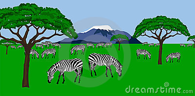 Zebra herd in african scenery